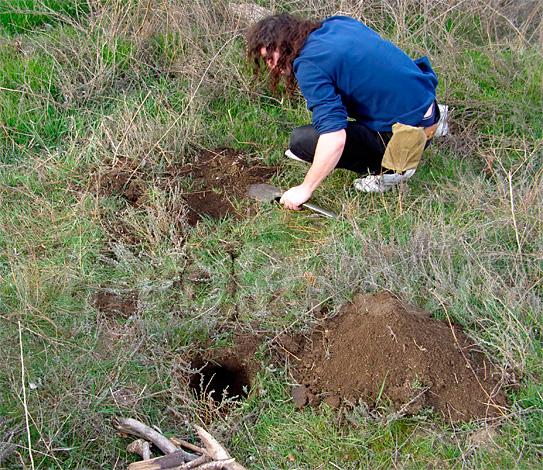 Зазоры между уложенным дерном и окружающей поверхностью почвы практически не заметны.