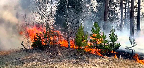 При таком пожаре выгорает большинство молодых деревьев и само пожарище затем долго не зарастает.