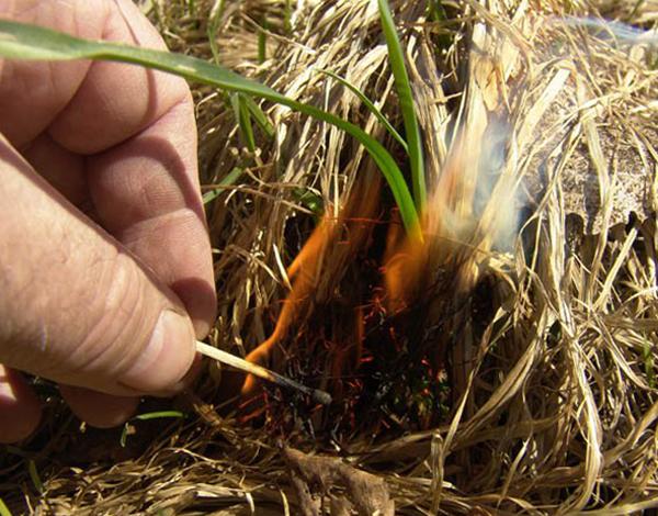 Сухая тонкая трава - хороший трут для разведения костра с одной спички, но не всегда она имеется под рукой.