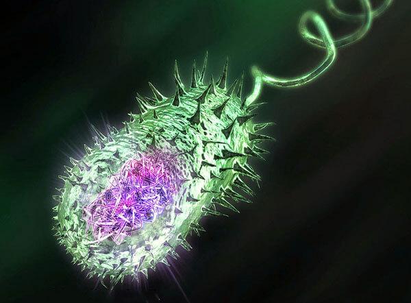 Вероятность заразиться холерой от сырой мидии на черноморском побережье невелика, но она имеется, поэтому по возможности мидий всегда нужно подвергать тепловой обработке, на костре или на плите в домашних условиях.
