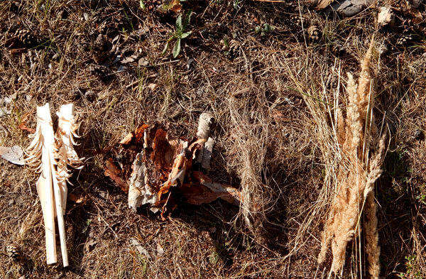 Сухие листья в качестве растопки не годятся, поскольку больше дымят, чем горят.