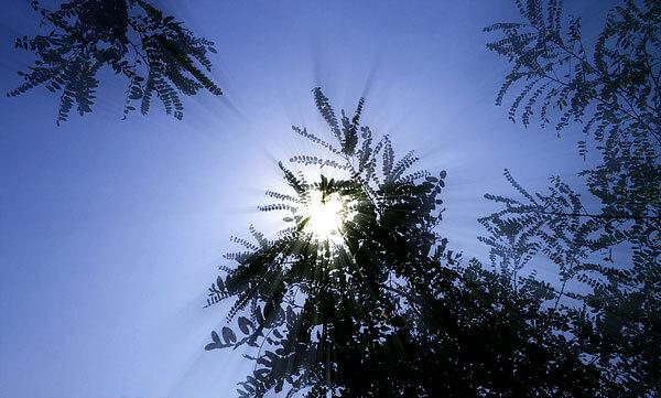 Для определения наивысшей точки стояния Солнца необходимо соорудить гномон и наблюдать за ним некоторое время.